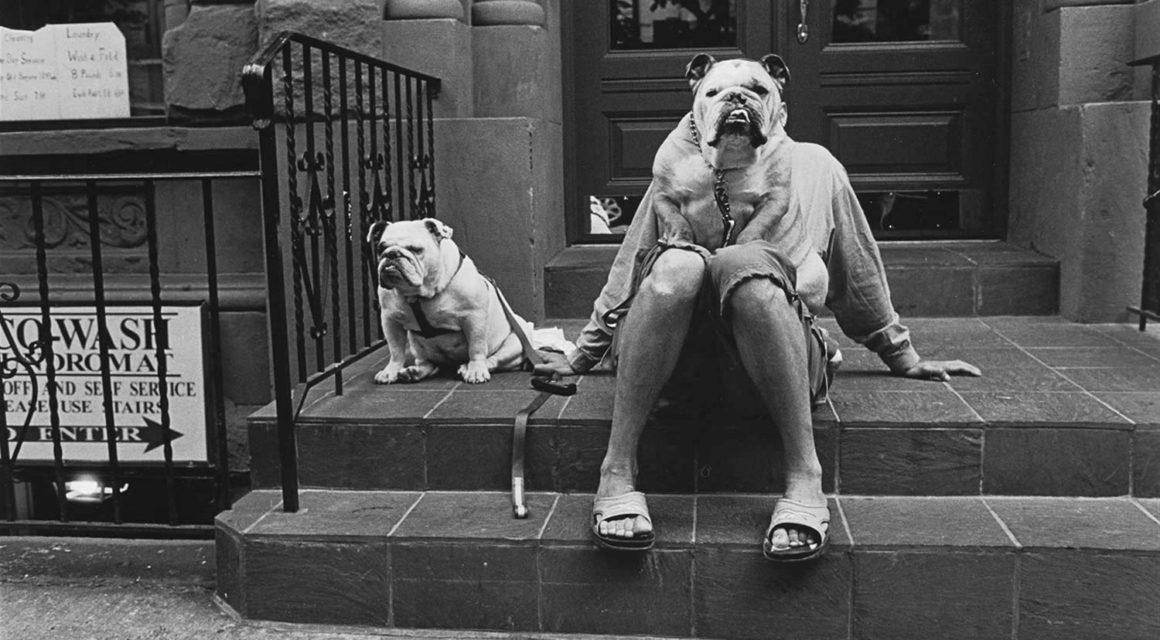 Elliott-Erwitt-New-York-City-Dogs